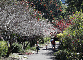 A pathway in the Sydney Botanic Gardens