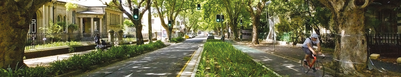 A shady, tree-lines street with bike lan in the City of Sydney LGA.